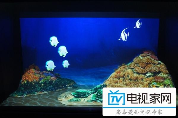 索尼探梦科技馆 开启8K海底水下世界